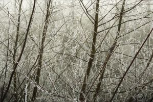 Frosty fragility by Dosulan