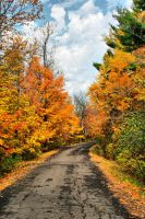 Fall Drive HDR by entropy462