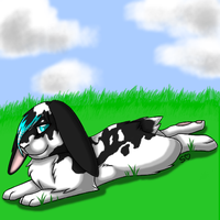 Ovipets Black White Bunny by MelSebeon