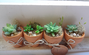 Mini Succulents - size by WaterGleam