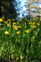 Yellow Flowers by ReSaturate