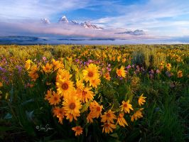 Grand Teton Sunrise by jessespeer