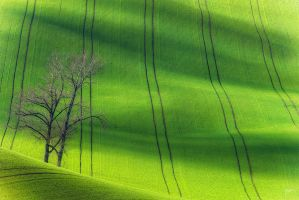 -Tree in Moravian waves- by Janek-Sedlar