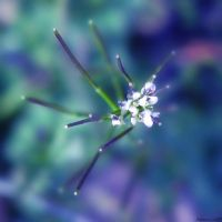 Tiny dreams... by anchiix