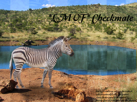 Zebra picture for checkmate by cattlebaron1