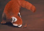 Red Panda by Emberguard