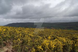 Gorse by BlizzardFace