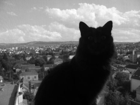 MiTzy VieW by AnniBe11e