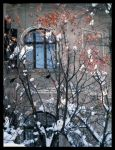 Winter has colours too by Anca-Mihaela