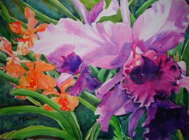 Cattleya and Co by p-e-a-k