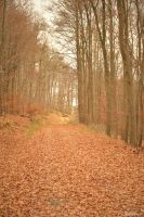 The last November Days by Ibilicious