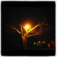 Streetlamp Tree by DuncanWearsABearSuit