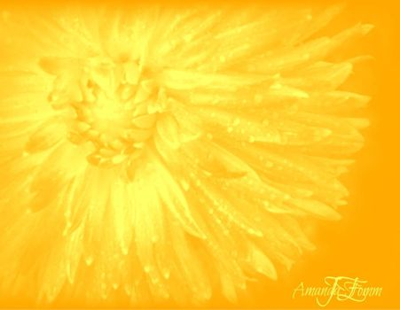 yellow flower by amanda01234