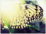 St. Louis Zoo Butterfly 004 by Lady-Trevelyan