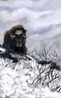 Musk Ox by mreach