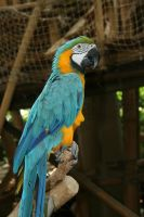 Parrot by VlinderButterfly