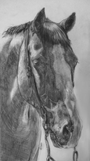 Quarter Horse drawing by IncredibleNacho