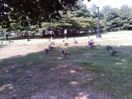 A Flock Of Feathered Friends by PrincesssLauren