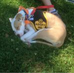 2014 MSPCA DOG WALK 1 by zraclooc