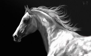 White horse by Purple-Ephemerality