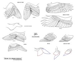 How to draw wings - resources by Fan-the-little-demon