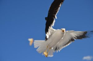 Seagull 1 by manmethoed
