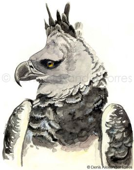 Harpy Eagle by torreoso