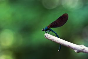 dragonfly contrast by RETROK1D