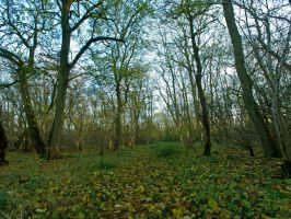 Path through the woods by davepphotographer