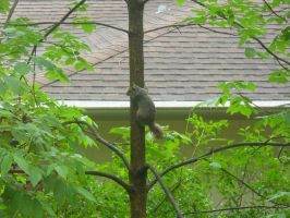SQUIRREL ON TREE by HezuNeutral