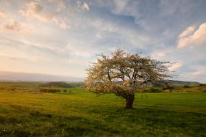 Springscape by one-shot-below