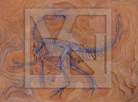 The putative Bulgarian ornithomimosaur - skeleton by T-PEKC