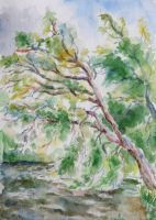 A tree near the water by Lady-DreamArt