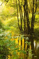 Autumn river by DeingeL