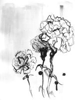 carnations I by amarielouise