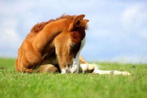 foal sleeping by imtl