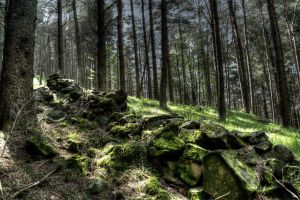 Forest Wall HDR by Preachman