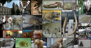 Compilation: London National History Museum by CabinetCuriosities