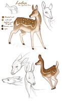 Deer Sketches by Nizira-Hathor