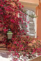 Window with Bougainvillea by AgiVega