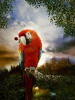 parrot in love by Drezdany
