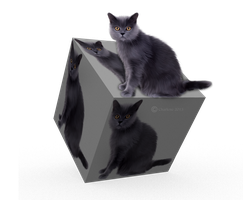 3D Cat Cube by chamirra