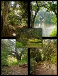 Summer Forest Stock Pack 3 by Lizzie-Bitty