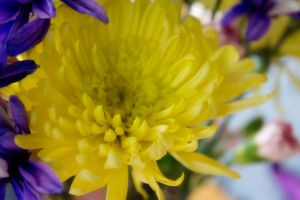 Colorful Flowers I by LDFranklin