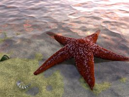 Starfish by chromosphere