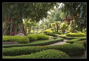 Garden of Curves by medveh