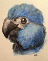 Baby Parrot Series: Spix Macaw by Puffinca