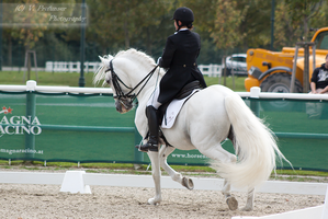 Dressage Cup_128 by CalyHoney