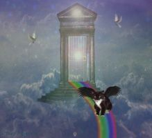 Patch At The Rainbow Bridge by Shirley-Agnew-Art
