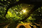 catch the sun by photo-earth